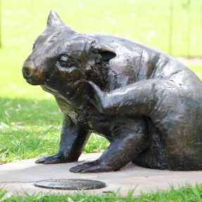 23. Hairy Nosed Wombat, Hutchinson Park, Norwood