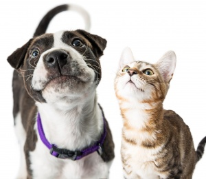 Pets, Pests & Animals