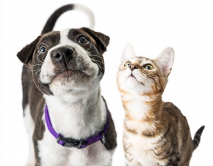 Dog and Cat Consultation Image